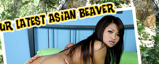 Mr Chews Asian Beaver Kim